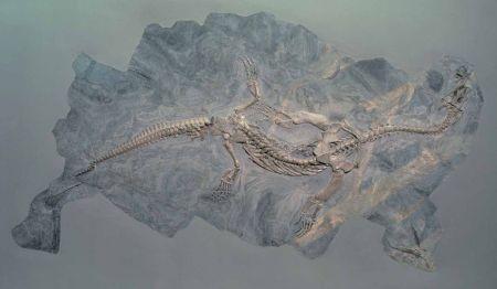 Ceresiosaurus, Monte San Giorgio